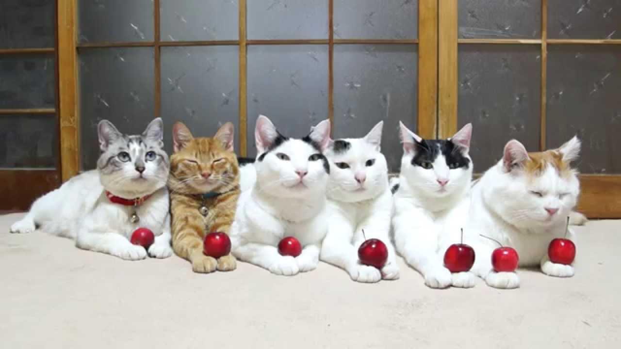 のせ猫 X ミニりんごと6匹の猫 Mini Apple And Cats Youtube