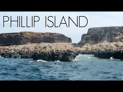 BOATING TO SEAL ROCK // Phillip Island, Australia