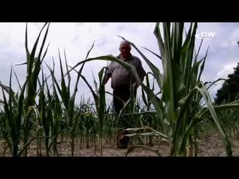 Засуха в Германии