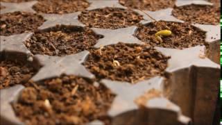Купить семена в Алматы(, 2017-01-14T20:43:01.000Z)