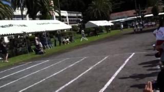 たちばな保育園での徒競走です。 しゅんくん1番でした。