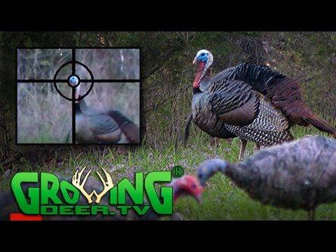 Teen Turkey Hunts | Tagging Toms  | Habitat Improvement Tips (#386) @GrowingDeer.tv