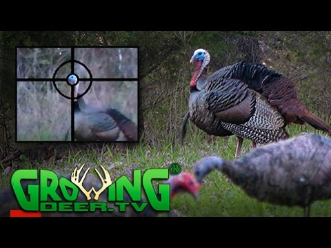 Teen Turkey Hunts | Tagging Toms  | Habitat Improvement Tips (#386) @GrowingDeer.tv