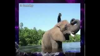 Интересное видео о дружбе животных