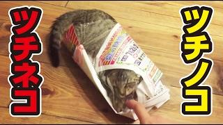 64日目 子猫 カサカサに夢中 kitten love in the bag