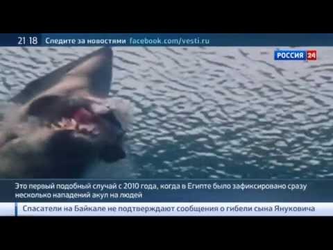 Египетская акула откусила ногу немецкому туристу