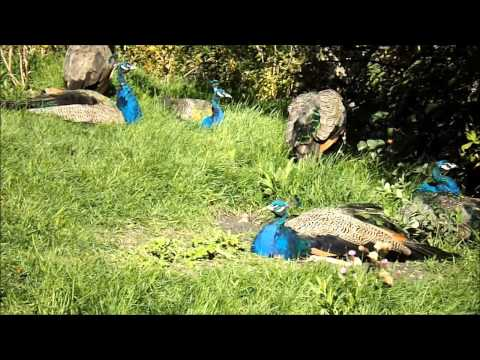 zoo tour sept 15 2014 part 1 Winnipeg, Manitoba, Assiniboine Park