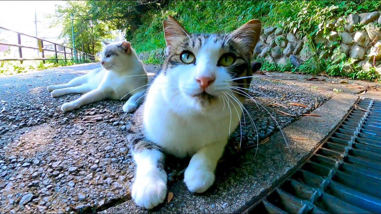 公園の坂道にいた野良猫に付いていってナデナデしてきた