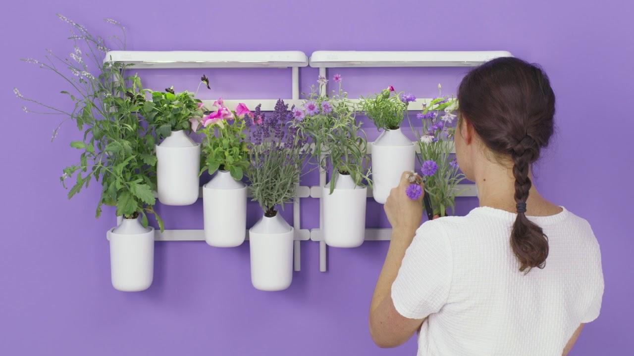 fonctionnement des potagers d interieur pret a pousser