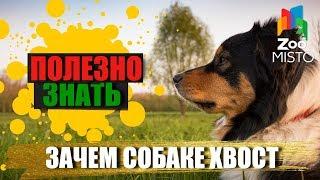 Полезно знать с ZooMISTO | Зачем собаке хвост