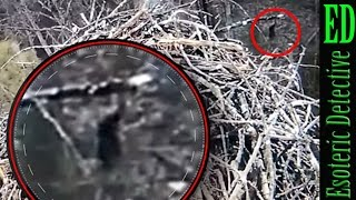 Bigfoot caught on live stream of baby bald eagles nest? #Michigan | #Bigfoot