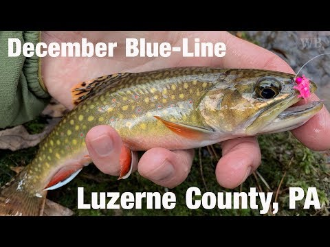 WB - December Blue-Line, Luzerne County, PA - December '18
