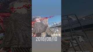 宇野港にある廃棄物でつくられたチヌのオブジェ。神宿の羽島めいさんが...