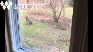 See LYNX CATS out our window!
