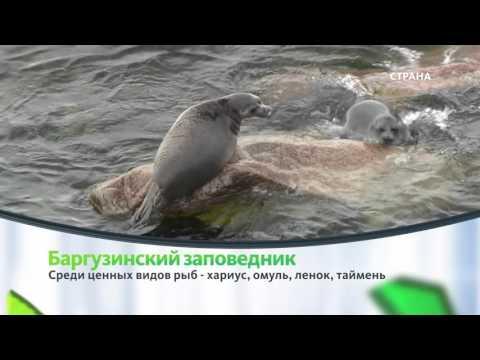 Баргузинский заповедник | Природа | Телеканал Страна