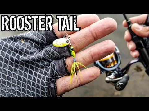 Aggressive Trout LOVED This Lure (Beginner Trout Fishing)