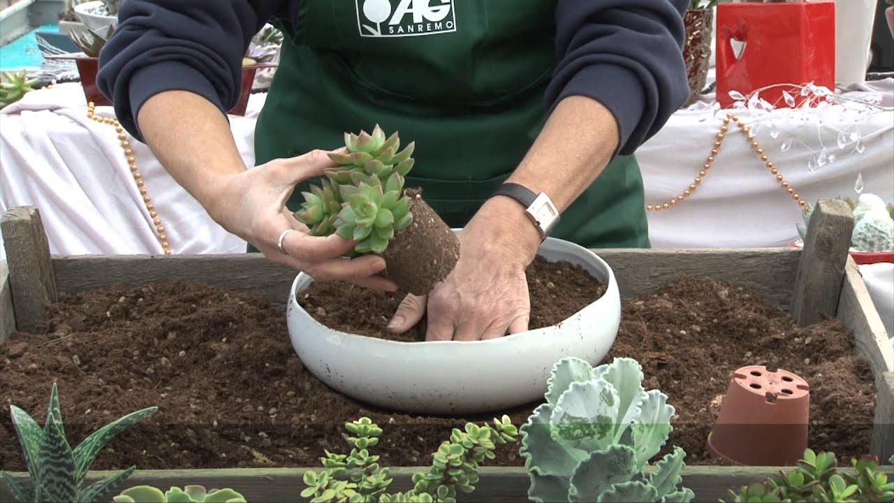 Terrario Per Piante Grasse composizione pianta grassa