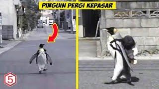 Bukan Hoax, Pake Ransel Pinguin ini bisa Pergi Belanja Sendiri Ke Pasar
