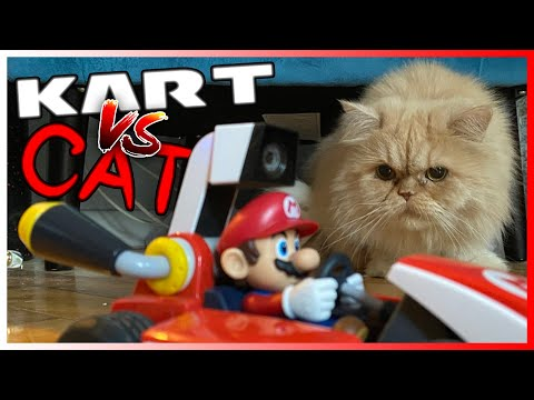 My Cat Hated Mario Kart Live: Home Circuit