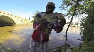 Potomac River Bass Fishing during month of June