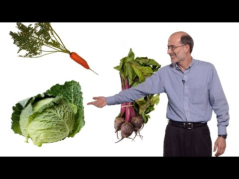 Richard Amasino (U. Wisconsin-Madison, HHMI) 2: Vernalization: how winter cold promotes flowering