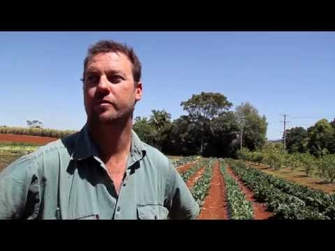 Tweed Sustainable Agriculture Strategy farmer case studies - Sweet Potato and Small-Crop Vegetable Farming