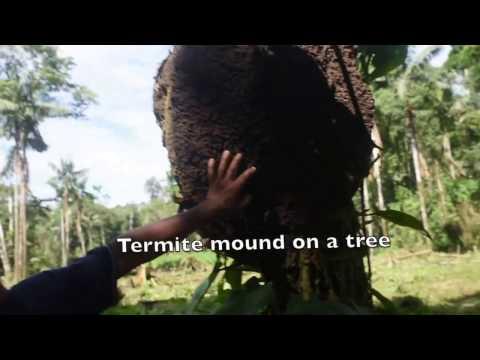 Amazon Jungle Trip with a Shuar Shaman
