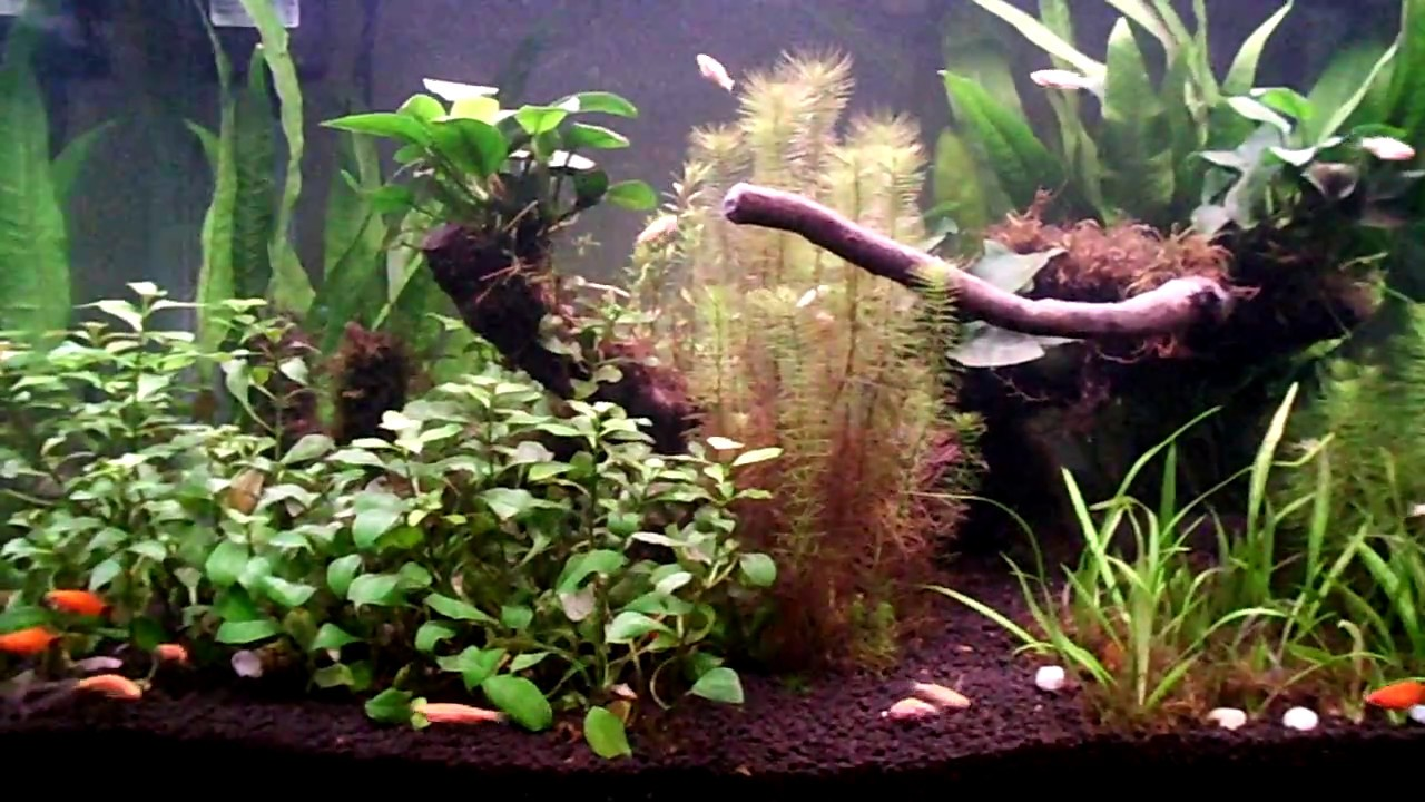 my 90 liters freshwater planted aquarium youtube. Black Bedroom Furniture Sets. Home Design Ideas