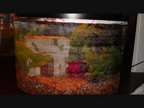 5 gallon fish tank set up how to set up a five gallon for 10 gallon fish tank dimensions