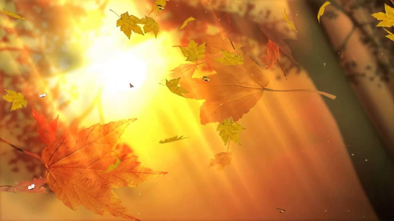 Fall Wallpaper For Laptop Листопад это листья падают Youtube