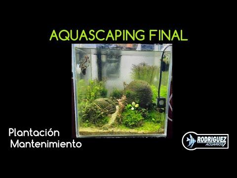 diseÑo-final-nano-aquascaping--segunda-parte-#aquascaping-#nanoaquascaping