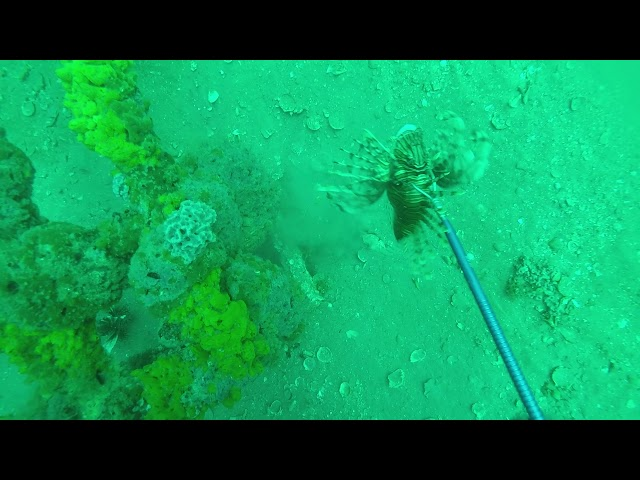 WHAT IS IT LIKE SHOOTING LIONFISH ON A TANK-SEE IT HERE