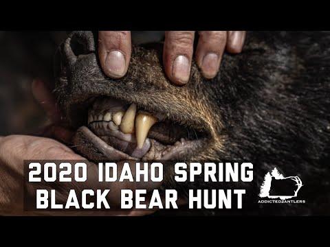 2020 IDAHO BLACK BEAR HUNT | BIG BEAR DOWN!!