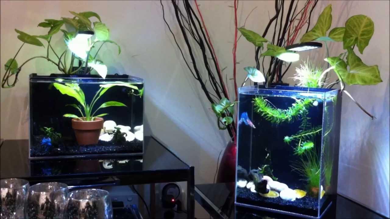 Diy Acrylic Nano Tank