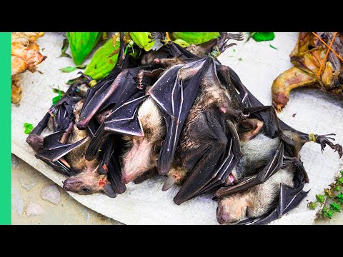 Eating BAT SOUP in North Sulawesi, Indonesia! What if I told you it's actually good?