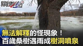 無法解釋的怪現象! 百歲桑樹一遇大雨就化身成「樹洞噴泉」!? 關鍵時刻 20180301-3 黃創夏