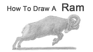 How to Draw a Bighorn Ram