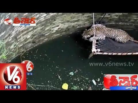 Cheetah fell into a well at Vadodara, Gujarat - Teenmaar News