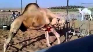 Repeat youtube video allah ka karishma janbaz khan waseer hasilpur 2   khans