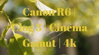 Canon R6   CLOG 3   Cinema Gam…