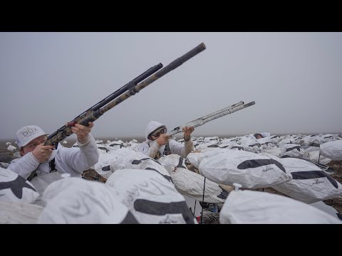 Opening Day Of Kansas Snow Goose Conservation Was Epic!!