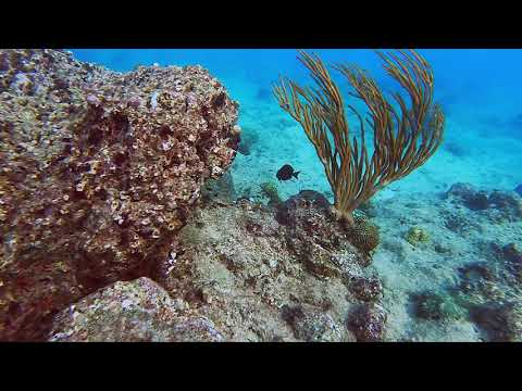 Celebrating All Over Barbados - From North Point to Folkestone Marine Park