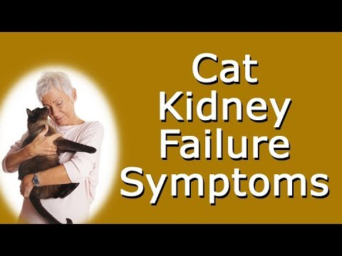Cat Kidney Failure Symptoms