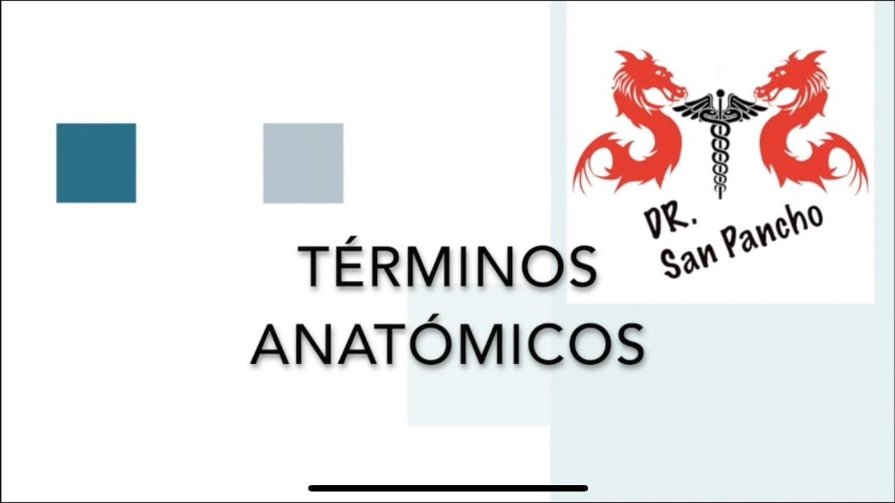 Terminología Anatómica Básica - YouTube