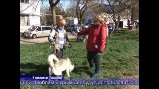 """В Симферополе прошёл """"конкурс красоты"""" среди крымских собак"""