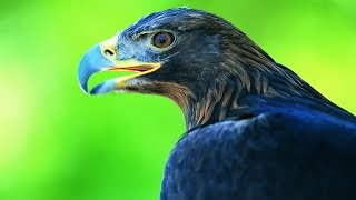Самые хищные птицы.