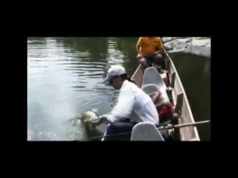 Wolf fish Alejandro Linares ,Viajes de pesca, Surinam
