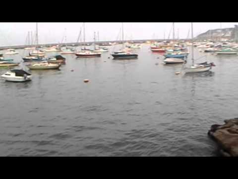 Brixham Harbour Fish Spotting