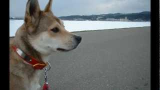 山古志村のマリと三匹の子犬 No.1
