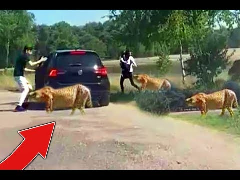 Stupid Family *LEAVES* Car AT ZOO!